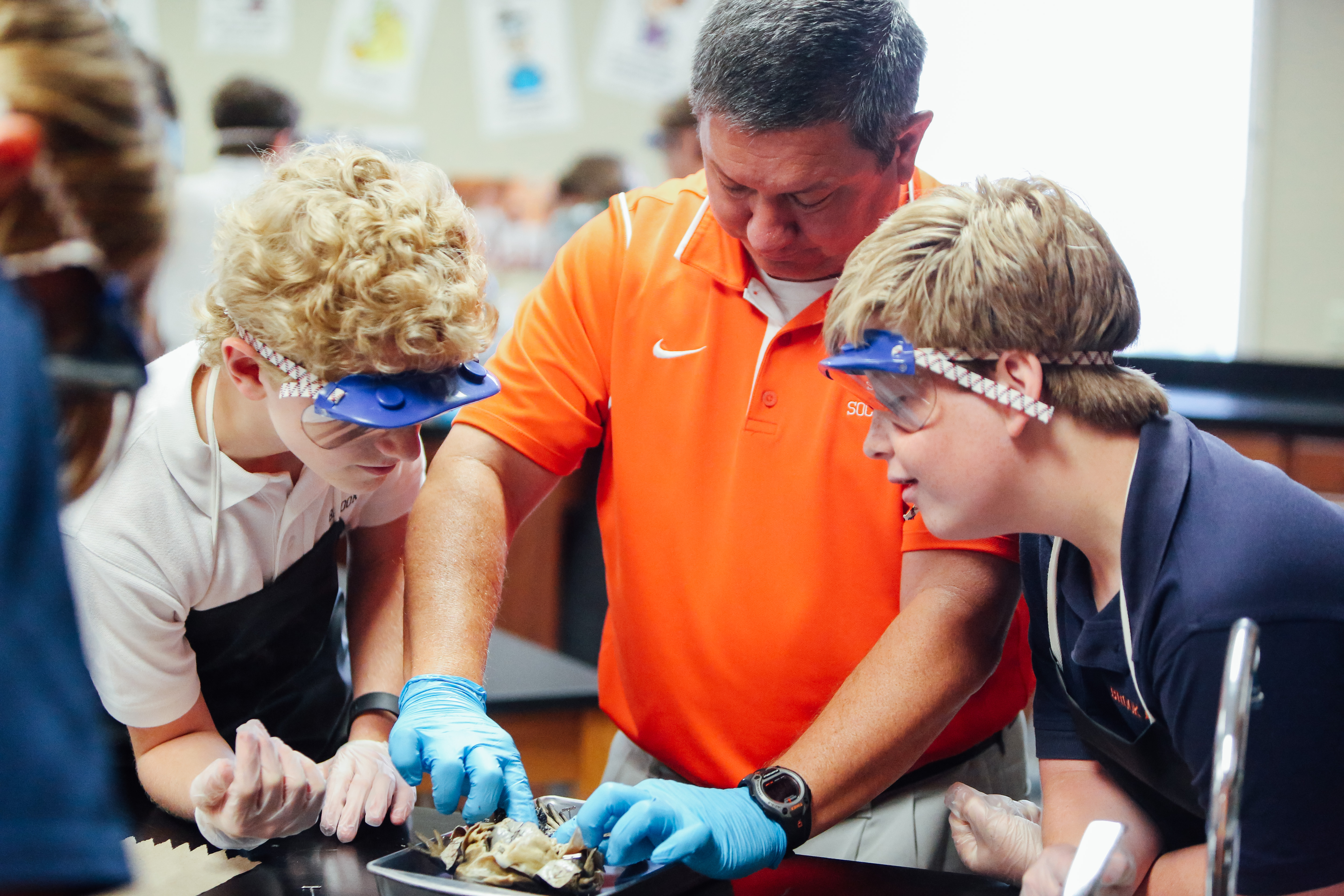 Frog dissection worksheet middle school