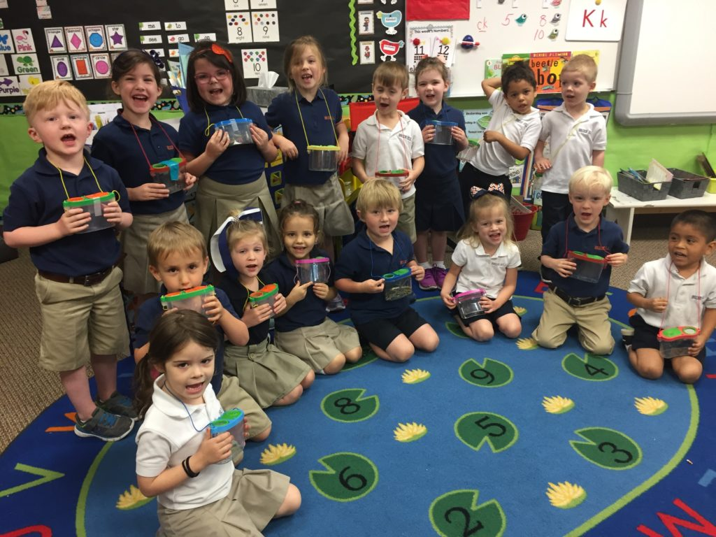 how to bring insects into preschool